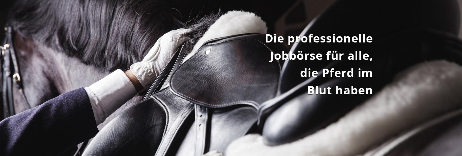 Traum-Job mit Pferden im Ausland? Kein Problem!